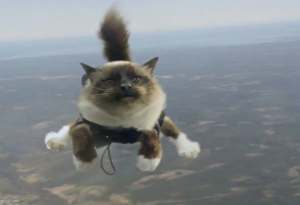 Музыка и видеоролик из рекламы Folksam - Parachuting cats