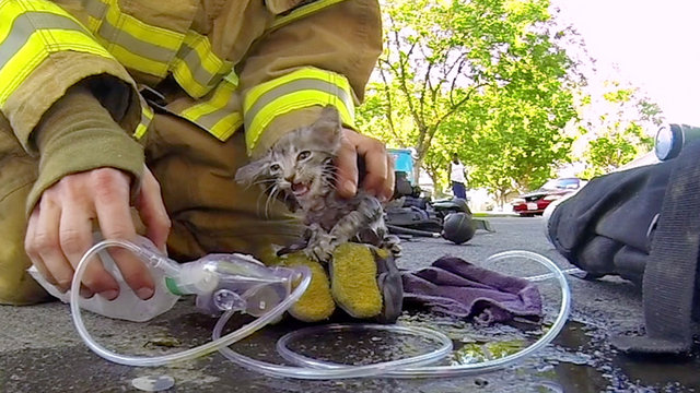 Музыка и видеоролик из рекламы GoPro: Fireman Saves Kitten