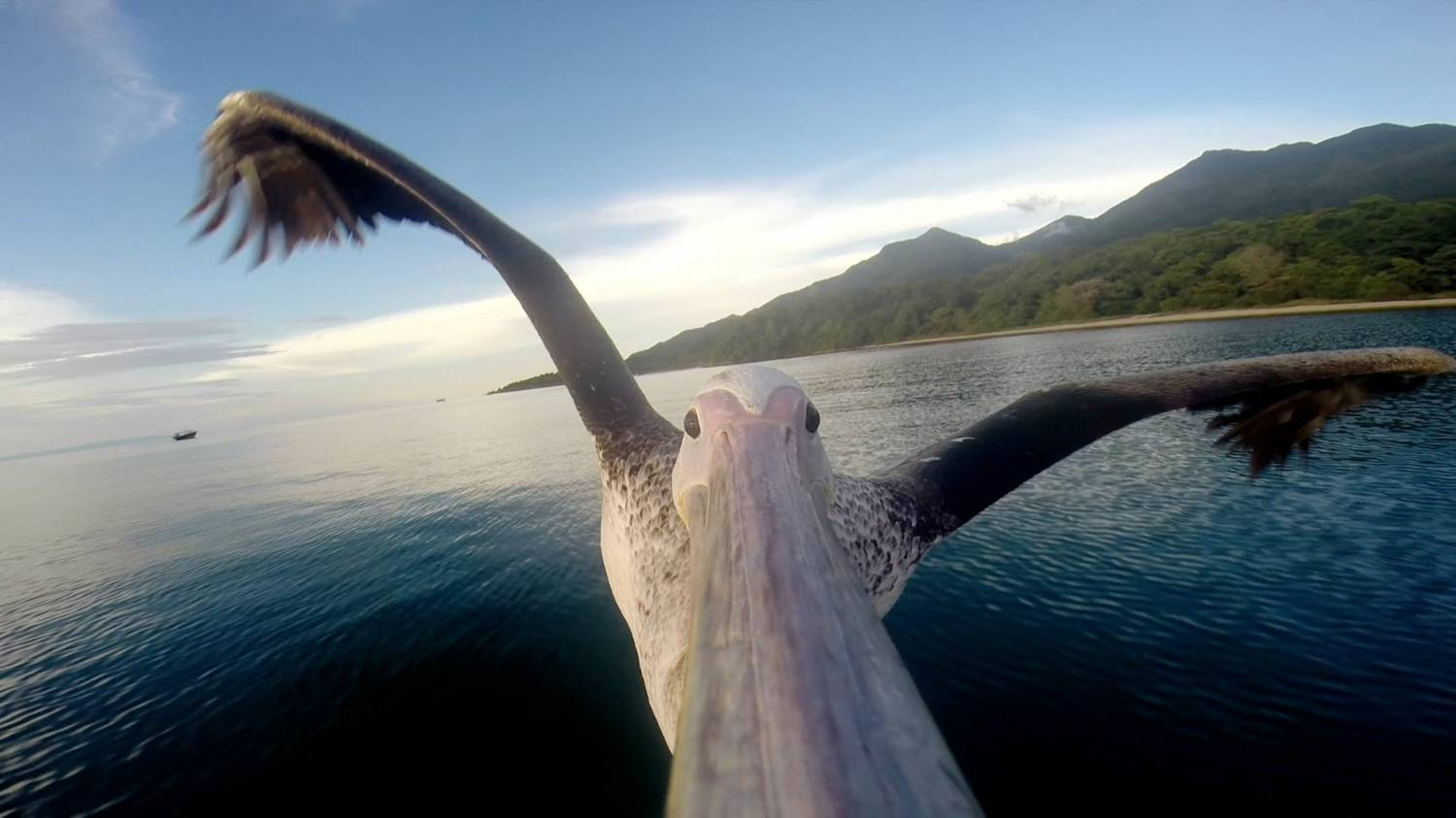 Музыка и видеоролик из рекламы GoPro - Pelican Learns To Fly
