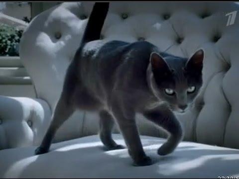 Кот в рекламе шеба