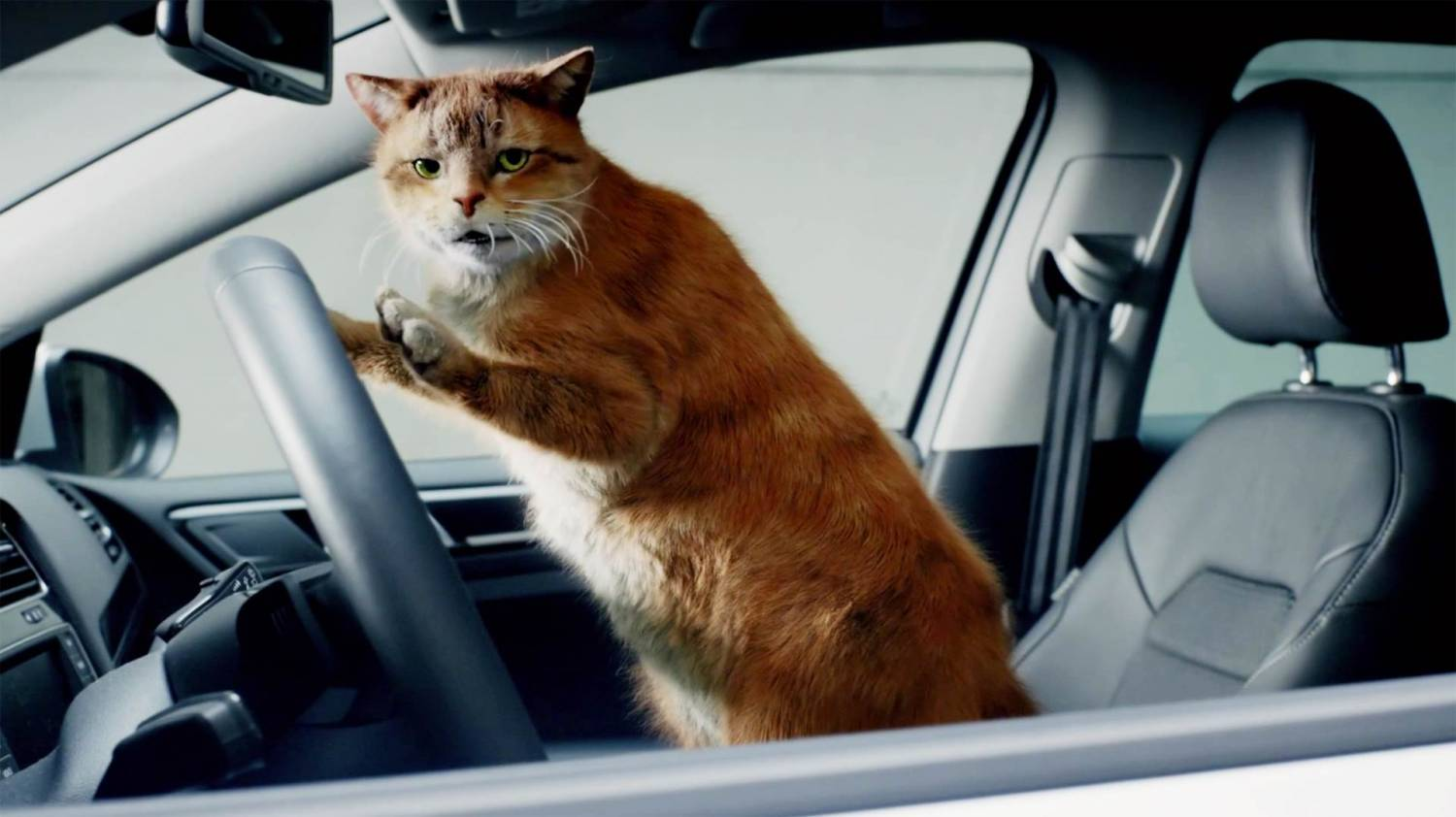 Музыка и видео из рекламы Volkswagen - Cat